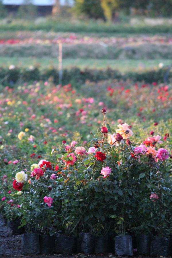viveros de Atlixco de las Flores