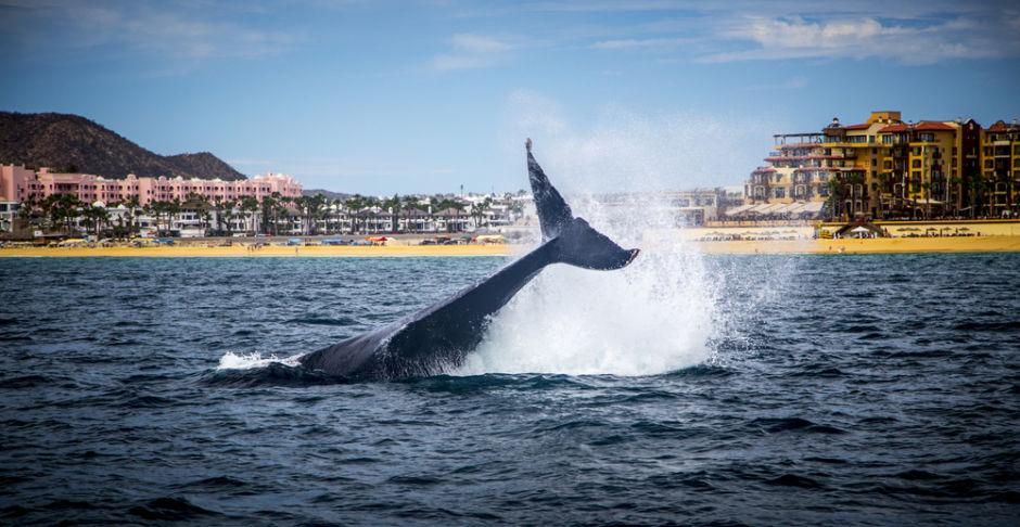 ver ballenas en México