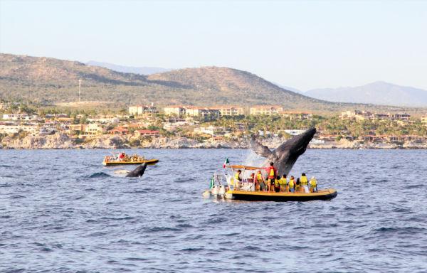 cuándo y dónde ver ballenas en México Cabo San Lucas