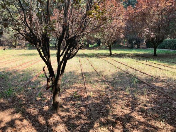 historia de los viveros de coyoacán