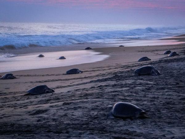 Qué hacer en las playas de Oaxaca