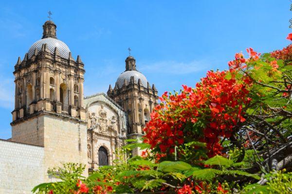 arboles de la primavera mexicana