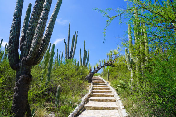 Reserva de la Biosfera Tehuacán-Cuicatlán