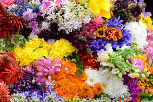 Feria de las Flores de San Ángel