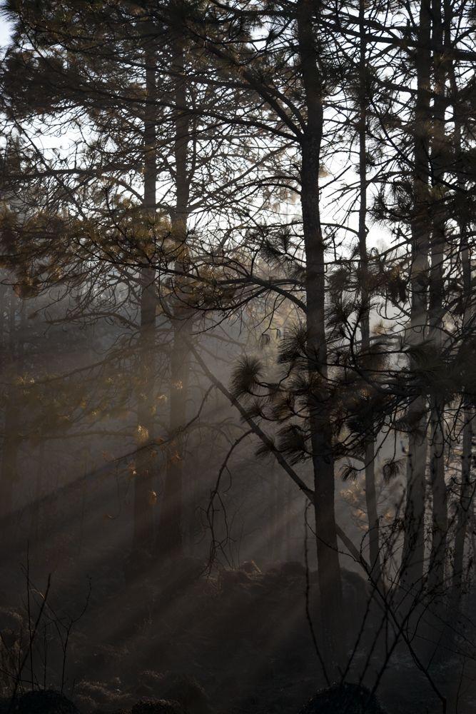 Cuexcomates o volcanes miniatura en Morelos bosque