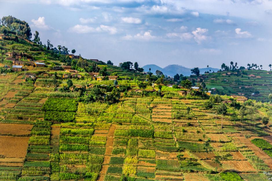 cultivos en Ruanda