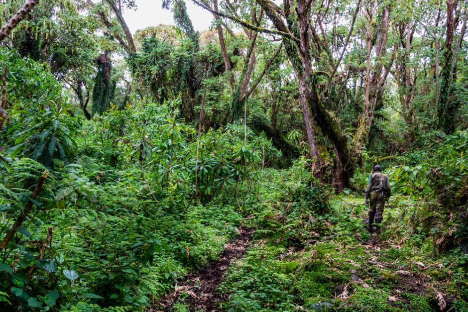 Parque Nacional de los Volcanes Ruanda
