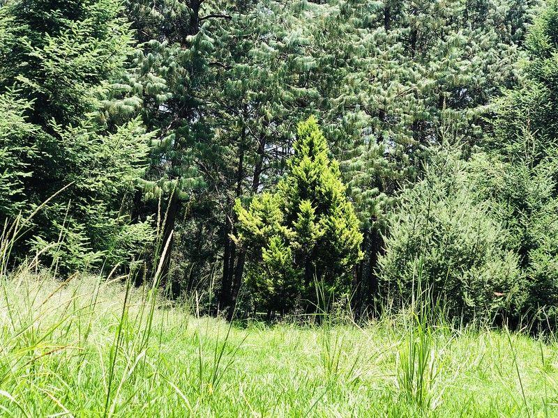 Viveros espacios verdes de Coyoacán