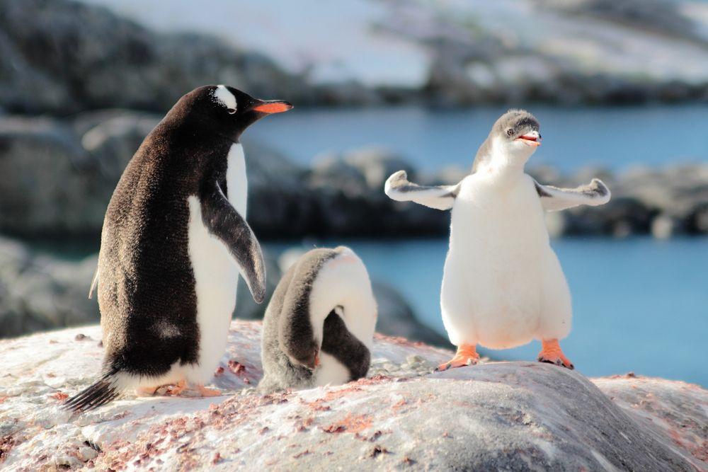 cosas para hacer antes de morir Antártida pinguinos