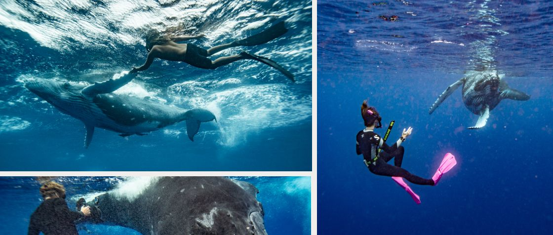 Swimming with Humpbacks + Island Adventure in Tonga