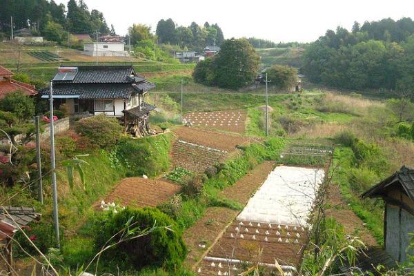 Learning experiences: Organic farming in Japan - Matador Network