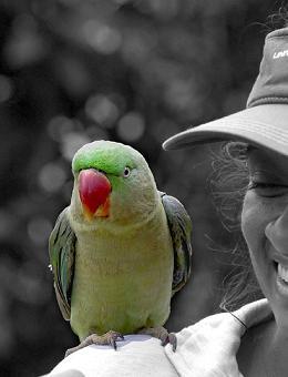 How to: Buy a talking bird - Matador Network