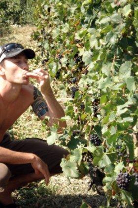 nz josh picking berries