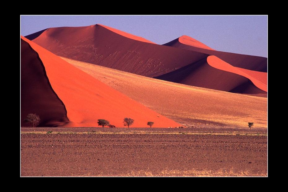 Red sand dunes in the Namib Desert