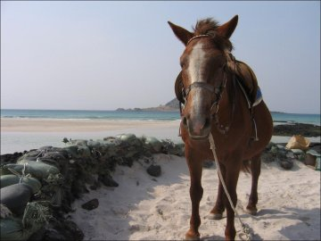 Horse on the beach on Jeju-do