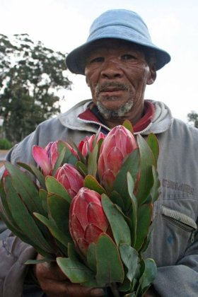 Protea Seller, Stellenbosch, South Africa