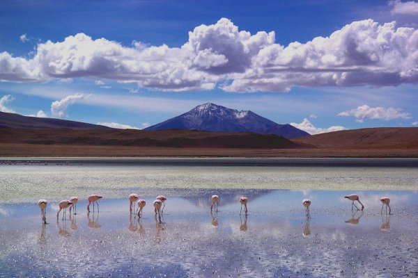 Flamingo lake in Bolivia's southwest