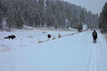 Cross-country skiing in Yellowstone