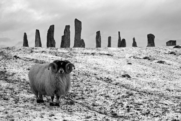 Ram at the Callanish Stones