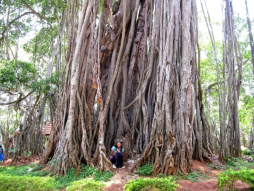 Big Banyan, Bangalore