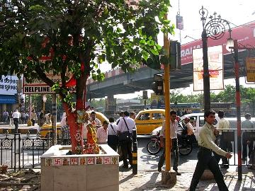 Park St. Pipal, Calcutta