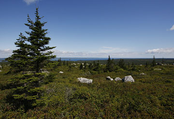 Lundy Fire Tower plateau