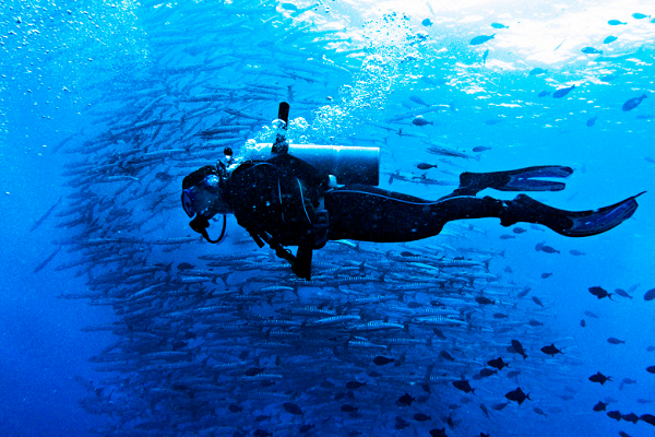 Diving Under Barracuda Point, Sipadan